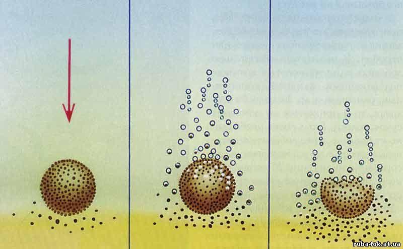Рис. 1. Процесс разрушения прикормочного шара в воде